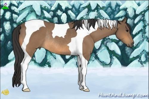 Horse Color:Buckskin Tobiano Rabicano