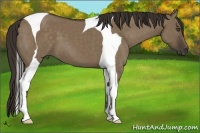 Horse Color:Liver Red Dun Tobiano