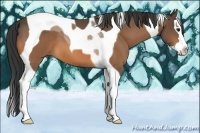 Horse Color:Buckskin Splash Tobiano