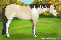 Horse Color:White Spotted Classic Champagne Dun