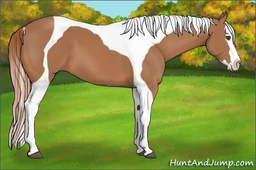 Horse Color:Chestnut Splash Tobiano