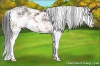 Horse Color:Brown Sabino