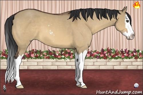 Horse Color:Bay Dun Sabino Splash