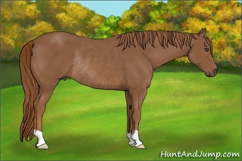 Horse Color:Chestnut Rabicano