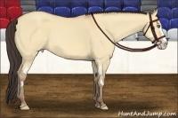 Horse Color:Amber Champagne Dun Splash Frame