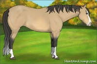 Horse Color:Buckskin Splash