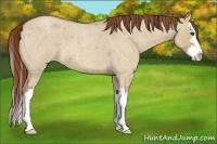 Horse Color:Red Dun Roan Sabino Splash