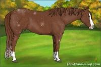 Horse Color:Chestnut Splash