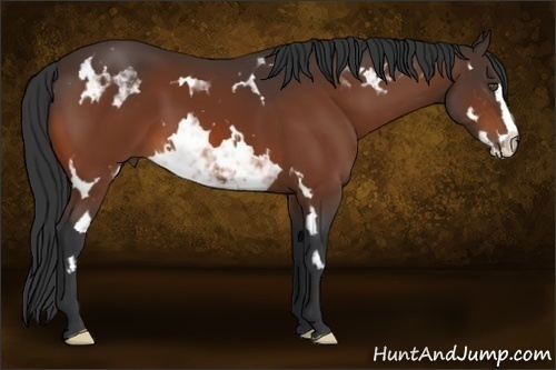 Horse Color:Bay Sabino Splash Frame