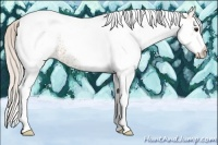 Horse Color:White Spotted Silver Bay Tobiano