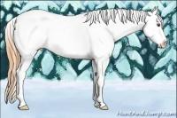 Horse Color:Buckskin Dun Tobiano Appaloosa