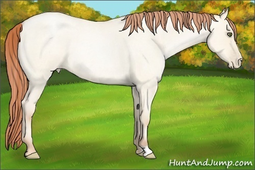 Horse Color:Classic Cream Champagne Roan Pearl Dun Frame