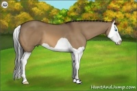Horse Color:Bay Dun Splash