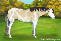 Horse Color:Buckskin Dun Sabino Splash
