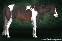 Horse Color:Brown Splash Tobiano  Brindle