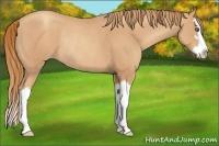 Horse Color:Gold Champagne Sabino Splash Rabicano