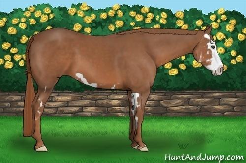 Horse Color:Chestnut Splash Frame
