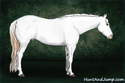 Horse Color:Chestnut Appaloosa