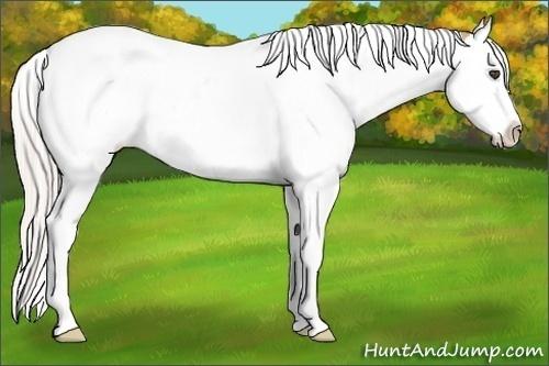 Horse Color:Silver Bay Dun Splash