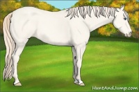 Horse Color:Perlino