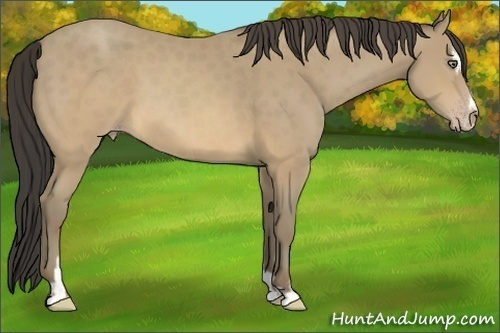 Horse Color:Sable Cream Champagne Sabino