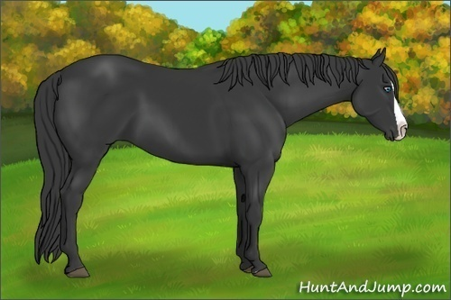 Horse Color:Black Splash