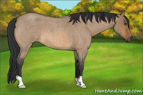 Horse Color:Unknown