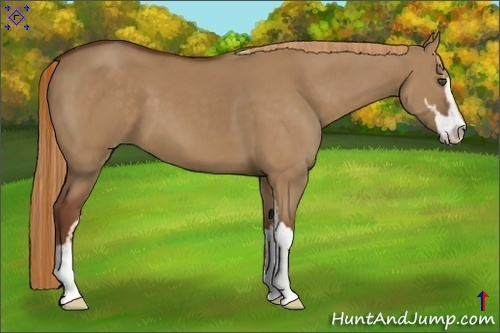Horse Color:Red Dun Sabino