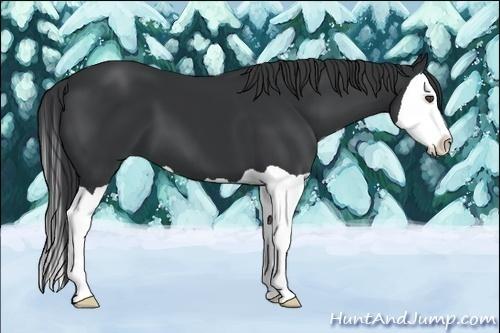 Horse Color:Black Splash