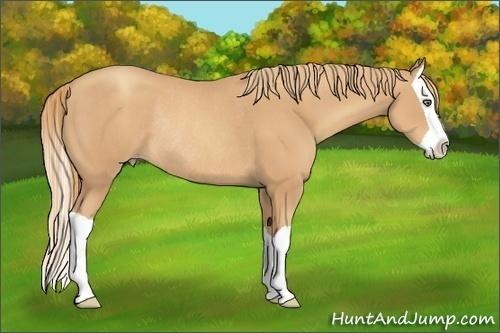 Horse Color:Gold Champagne Splash Rabicano