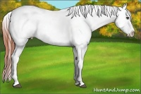 Horse Color:White Spotted Bay Roan Dun Appaloosa
