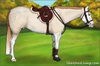 Horse Color:Buckskin Pearl Dun Splash