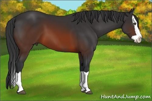 Horse Color:Brown Splash