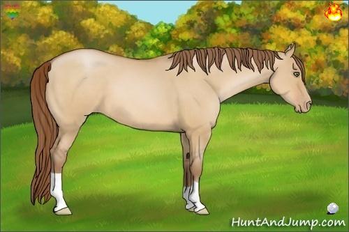 Horse Color:Bay Pearl Dun