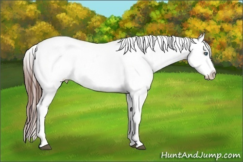 Horse Color:White Spotted Bay Splash Appaloosa