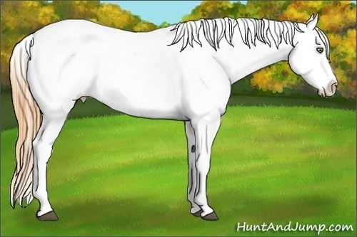 Horse Color:Brown Pearl Appaloosa