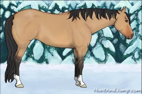 Horse Color:Bay Dun