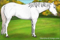 Horse Color:White Spotted Palomino Sabino Splash Appaloosa