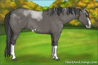 Horse Color:Grullo Sabino Splash Rabicano