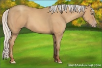 Horse Color:Silver Amber Champagne Frame