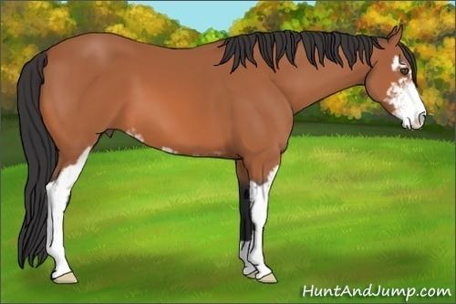 Horse Color:Bay Sabino