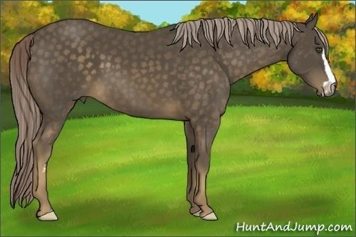 Horse Color:Chocolate Palomino Sabino Frame