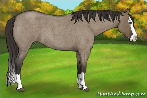 Horse Color:Liver Red Dun Roan Splash
