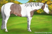 Horse Color:Bay Roan Splash Tobiano