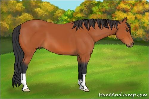 Horse Color:Bay