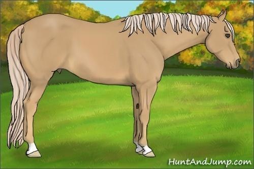 Horse Color:Palomino