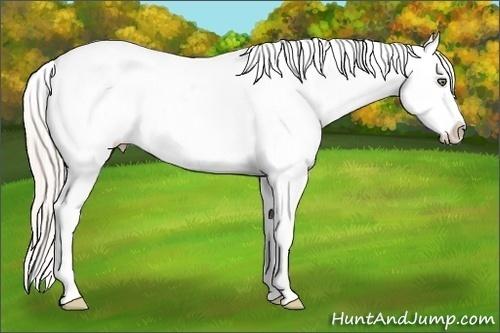 Horse Color:Silver Amber Champagne Sabino Appaloosa