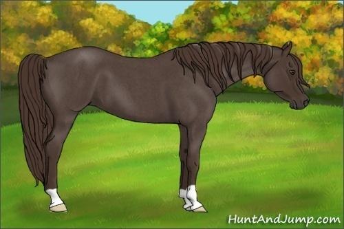 Horse Color:Liver Red Roan