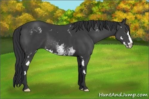 Horse Color:White Spotted Black Splash Frame