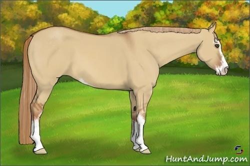 Horse Color:Red Dun Sabino